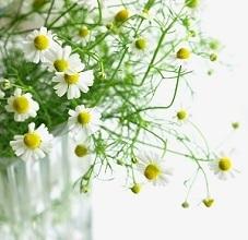 aroma-002.jpg